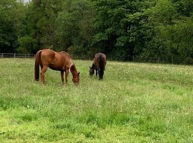 Horses grazing at Rawcliffe House Farm