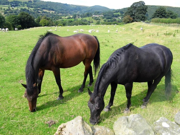 Horses grazing at Easterside